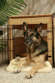 Using a Dog Crate as Furniture