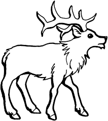 Small Picture How to Draw an Elk Coloring Pages Download Print Online
