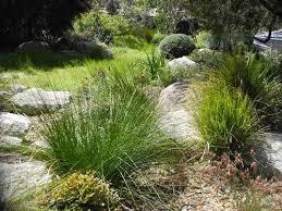 Small Picture 137 best Gardens images on Pinterest Australian native garden