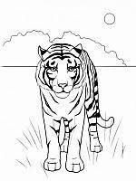 Tigri Disegni Da Colorare E Stampare Gratis Immagini Per Bambini