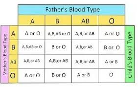If My Father Has A Blood Group Of O Ve And My Mother Has A