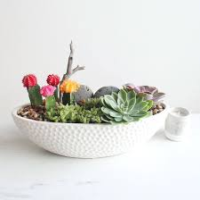 cactus and succulents in a white vase