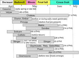 Blueberry Weed Control Late Spring And Summer Options Msu