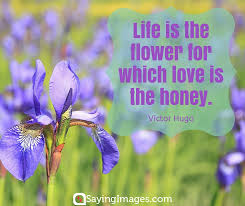 Flower Love Quotes 100 Beautiful Flower Quotes SayingImages 97