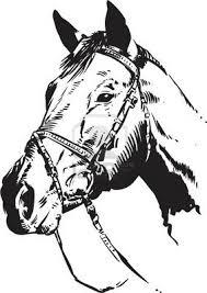 736x1043 quarter horse head clip art