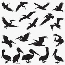 キウイ 鳥 に関するベクター画像写真素材psdファイル 無料ダウンロード