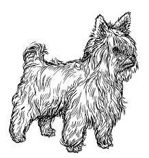 Yorkshire Terrier Vectoren Illustraties En Clipart 123rf