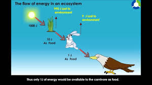 The Flow Of Energy In An Ecosystem