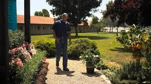 the best place to plant a gardenia bush garden savvy