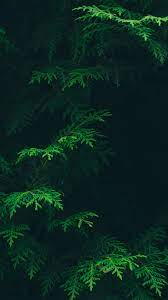 vs88-tree-leaf-green-pattern-nature