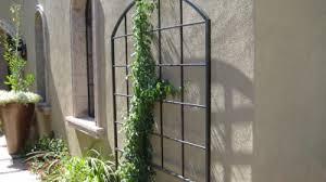 Small Picture Garden Trellis Metal Trellises Plant Trellises Arizona Trellis