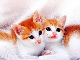 cute cat wallpaper backgrounds. Exellent Wallpaper Cute Cats  HD Wallpapers Pictures Images Backgrounds Photos To Cat Wallpaper