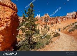 hiking the navajo and queens garden trail in bryce canyon national park navajo loop and