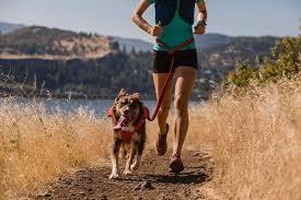 Roamer™ Bungee Running Dog Leash | Ruffwear