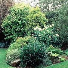 Small Picture 56 best gardening shrub border images on Pinterest Landscaping