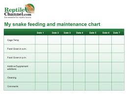 Snake Feeding Chart