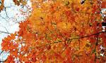Подари мне осень свой тихий сад и звезды далекой сияние