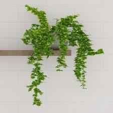CLIMBERS  Climbing PlantsClimbing Plant