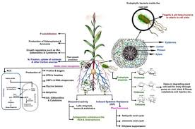 Plant Nutrient Interaction Chart Ijms Special Issue Plant Microbe Interaction 2017
