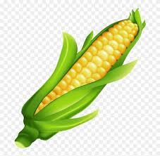 ear of corn clipart. Beautiful Corn Ear Of Corn Clipart Intended