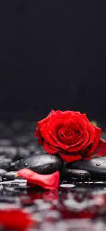 petals, stones, water 5120x2880 UHD 5K ...