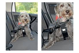 halfords medium dog car harness best in car dog guards and harnesses auto express