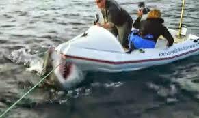 great white shark attacks boat. Exellent Shark VIDEO White Sharks Attack Small Boat In Great Shark Attacks Boat A