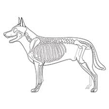 Small Picture Dog Skeleton Coloring PagesSkeletonPrintable Coloring Pages Free