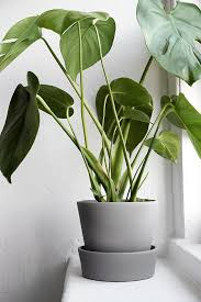 Plants at Home  Wishlist