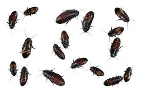 Baby Roaches 9 Simple But Effective Ways To Get Rid Of It Naturally