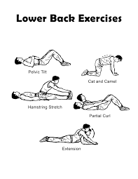 Back Exercises Gym Chart Lower Back Exercise Chart