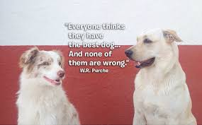 Dog Best Friend Quotes Interesting 48 Quotes That Only Dog Crazy People Can Relate To BarkPost