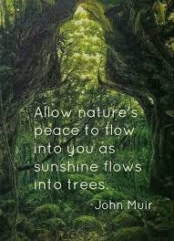 Allow Nature's Peace To Flow Into You As Sunshine Flows Into Trees Unique Best Nature Quotes