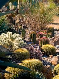 Small Picture 40 Best Cactus to Grow Ideas For Your Garden DECOREDO