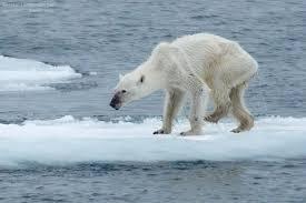 תוצאת תמונה עבור תמונות של קרחונים נמסים