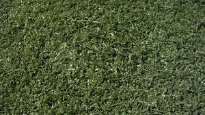 artificial turf texture. Artificial Turf Texture U