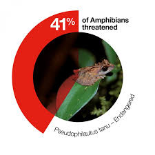 Amphibians Iucn