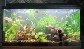 easy diy fish tank decorations by size handphone