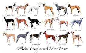 Brindle Color Chart The Official Greyhound Color Chart Lists Every Colour Except