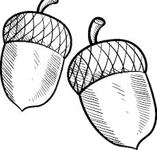 Acorn Coloring Page Acorn Coloring Pages Coloring Pages Free Acorn