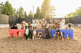 THE <b>DOG PATCH</b>