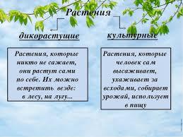Презентация на тему Дикорастущие и культурные растения Сколько  Растения дикорастущие культурные Растения которые никто не сажает они расту