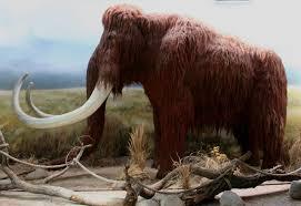 Resultado de imagen de mamut