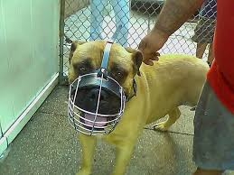 Gorgeous Hercules Wearing Our Wire Basket Dog Muzzles Size