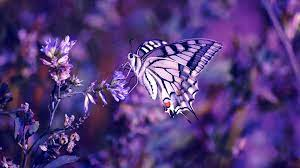 40 Nice Butterfly Wallpapers ...