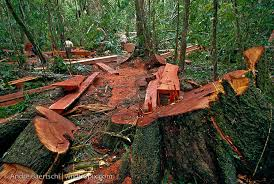 Gaining Ground In The Fight To Stop Illegal Logging Strange Behaviors