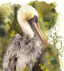 brown pelican print nature sea bird pelican art watercolor painting print
