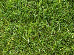 tall grass texture seamless. Perfect Tall Grass Texture For Tall Seamless S
