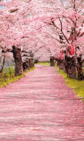 Cherry Blossom Backdrop Cherry Blossom Aisle Backdrop Photo Pie