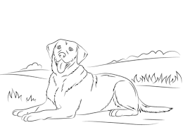 Labrador Retriever Coloring Page Dogs Dog Coloring Page
